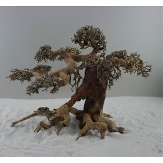 Aquarium Bonsai Midi M 23-30 cm